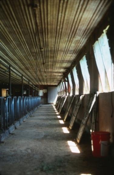 Dairy Stalls
