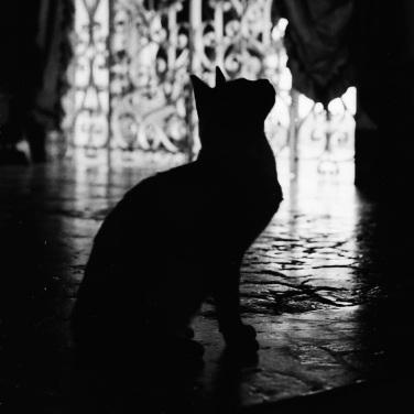 Medillin Cat #!
