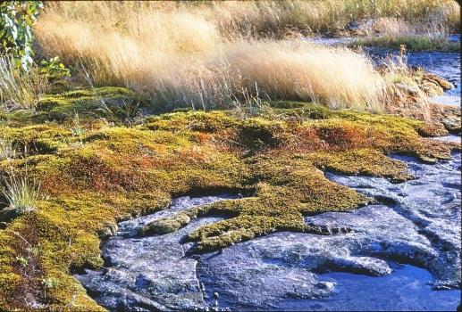 Georgian Bay Moss