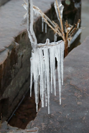 Oakledge Ice #1