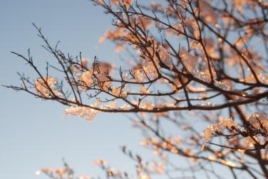 Ice Blossom #1