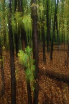 Autumn Motion