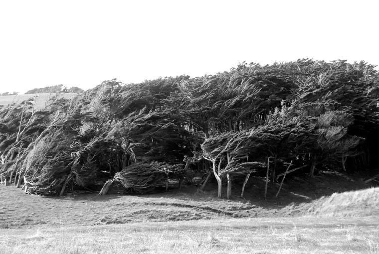 15 Slope Point trees 2 - Version 2