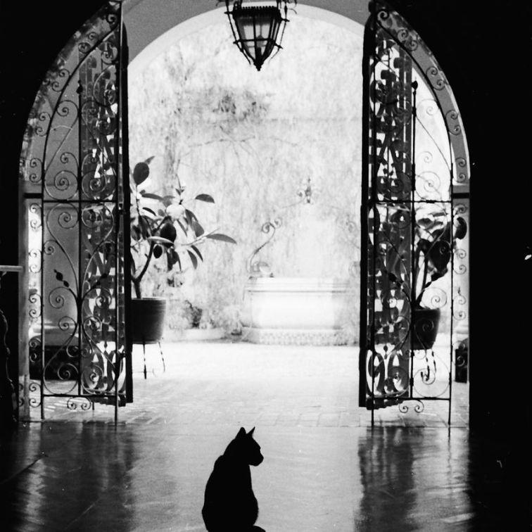 Medellin Cat #2